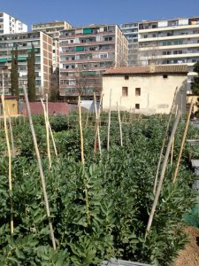 Different Urban farming projects in Barcelona